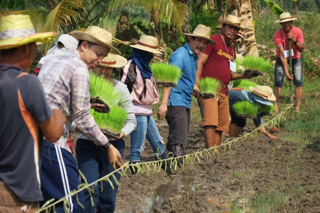 แปลงทดลองนาข้าวเกษตรอินทรีย์ จังหวัดฉะเชิงเทรา